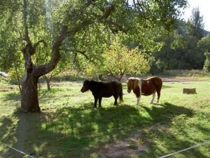 151 Ponies Damias