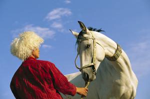 166 Afgha horse
